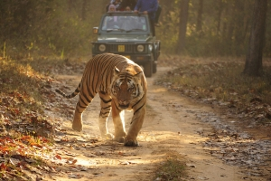 Wildlife Activity Holidays - Pench National Park.