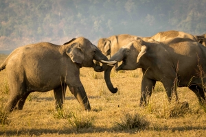 Wildlife Activity Holidays - Corbett National Park