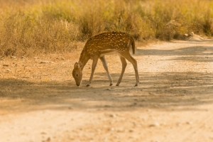 Wildlife Activity Holidays - Pench National Park